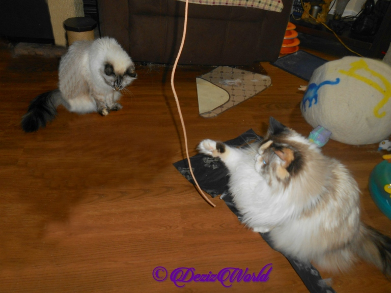 Dezi and Raena play with the Kitty Whip
