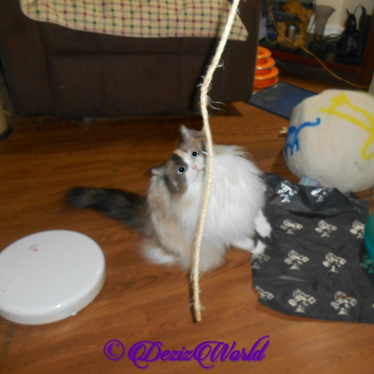 Raena plays with the Kitty Whip