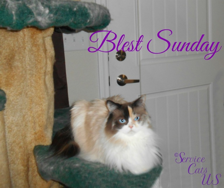 Raena lays on cat tree, Blest Sunday template