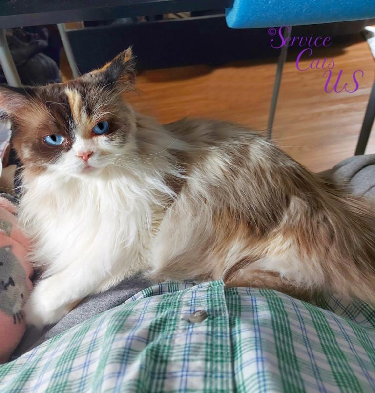 Raena lays in mommy's lap, full body