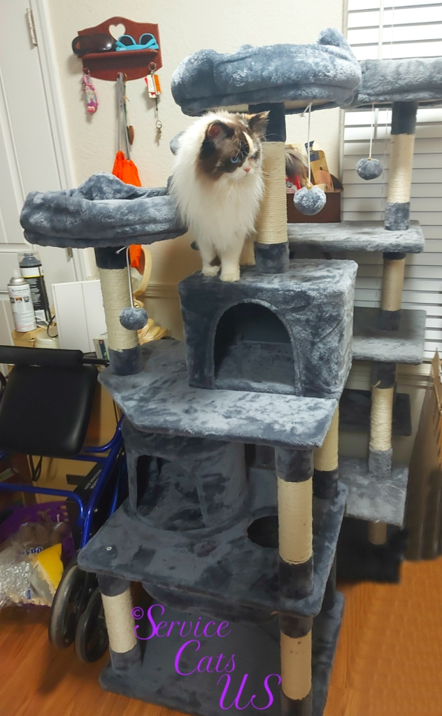 Raena stands on new cat tree