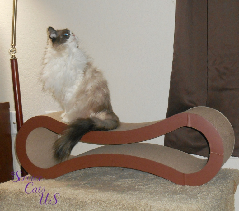 Raena looks up while sitting on scratcher