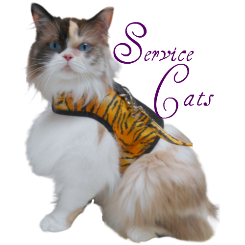 Raena in harness, service cats logo