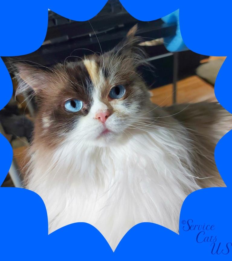Raena's blue framed lap selfie