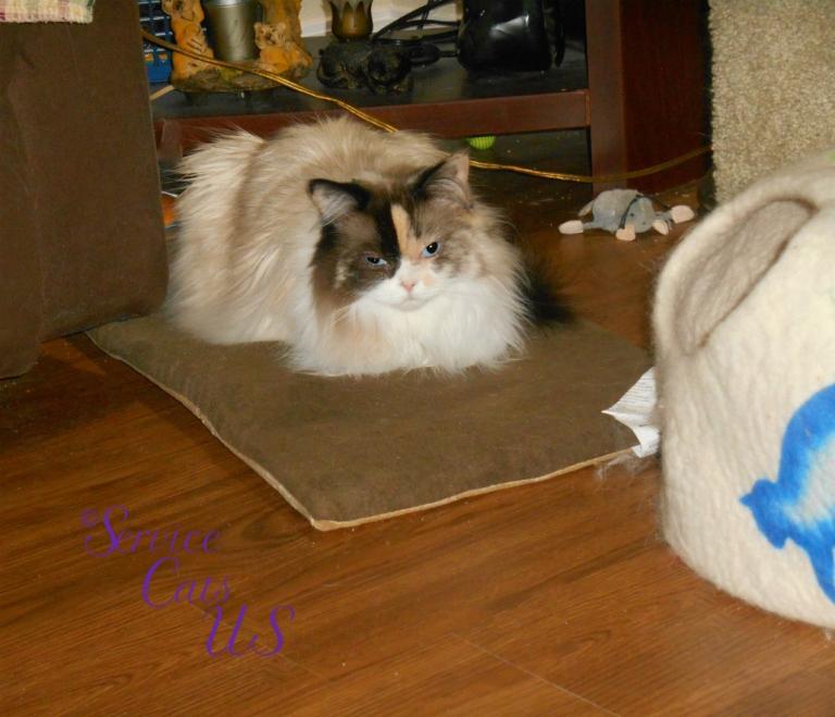 Raena lays on heated mat
