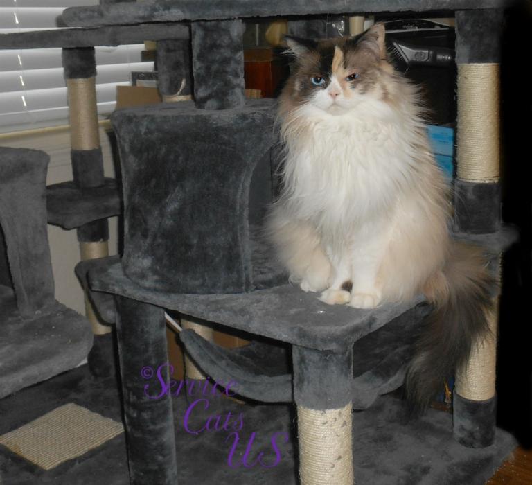 Raena sits pretty on the cat tree