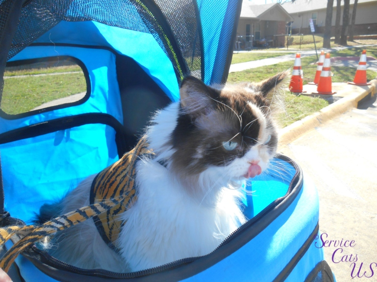Raena sits in stroller with tongue out