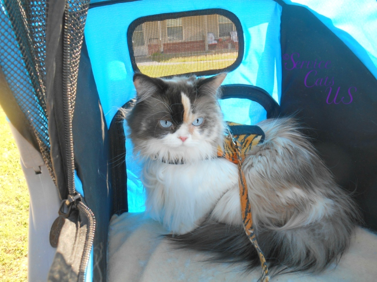 Raena sits pretty in her Gen7 Stroller