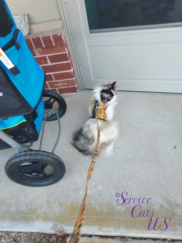 Raena sits at front door in harness