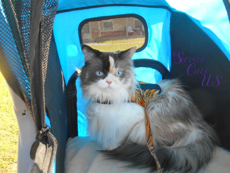 Raena sits pretty in the stroller and harness