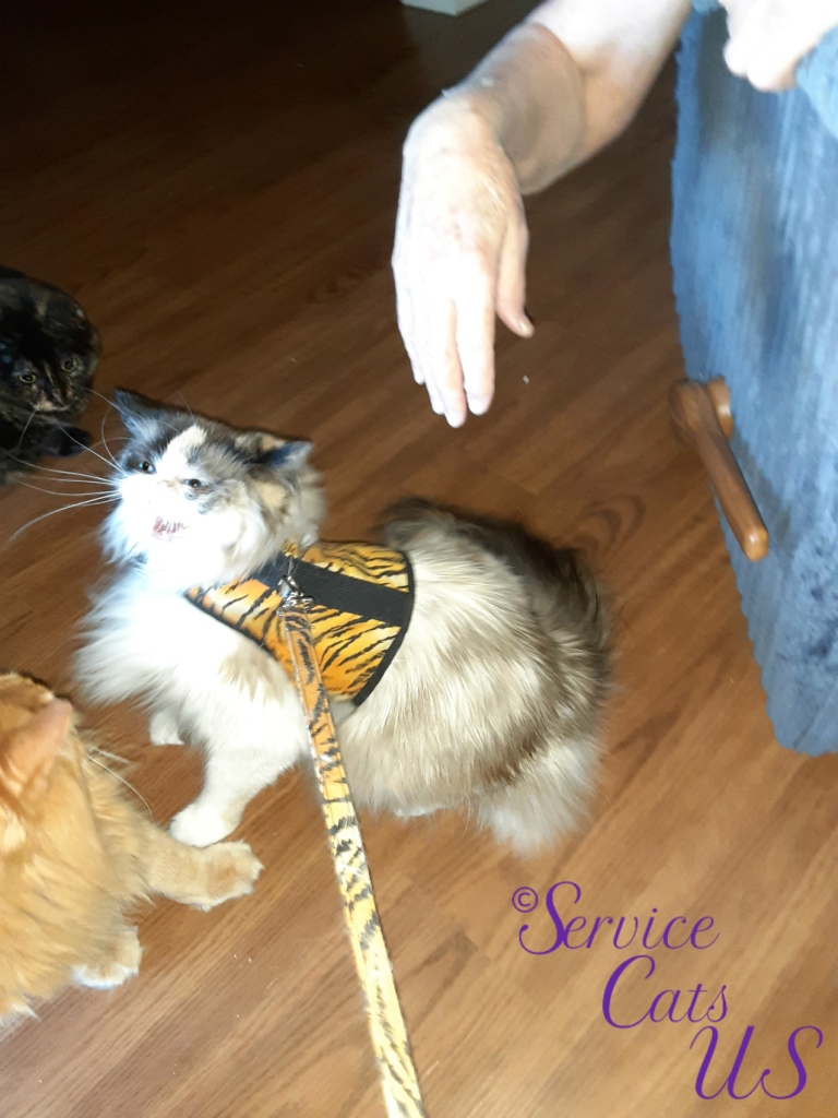 Raena visits Spook and Jubal while wearing her harness