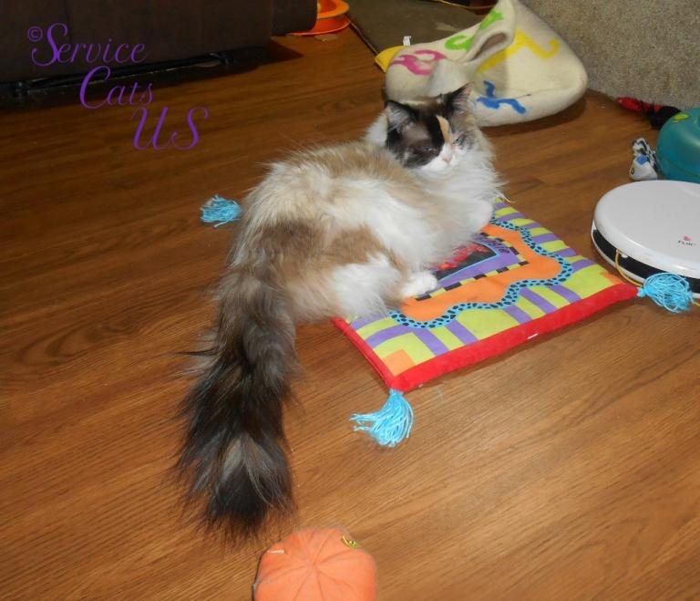 Raena lays on boogie mat