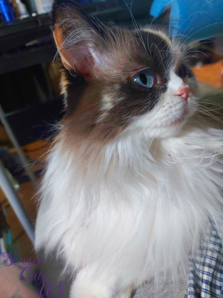 Raena's profile lap selfie