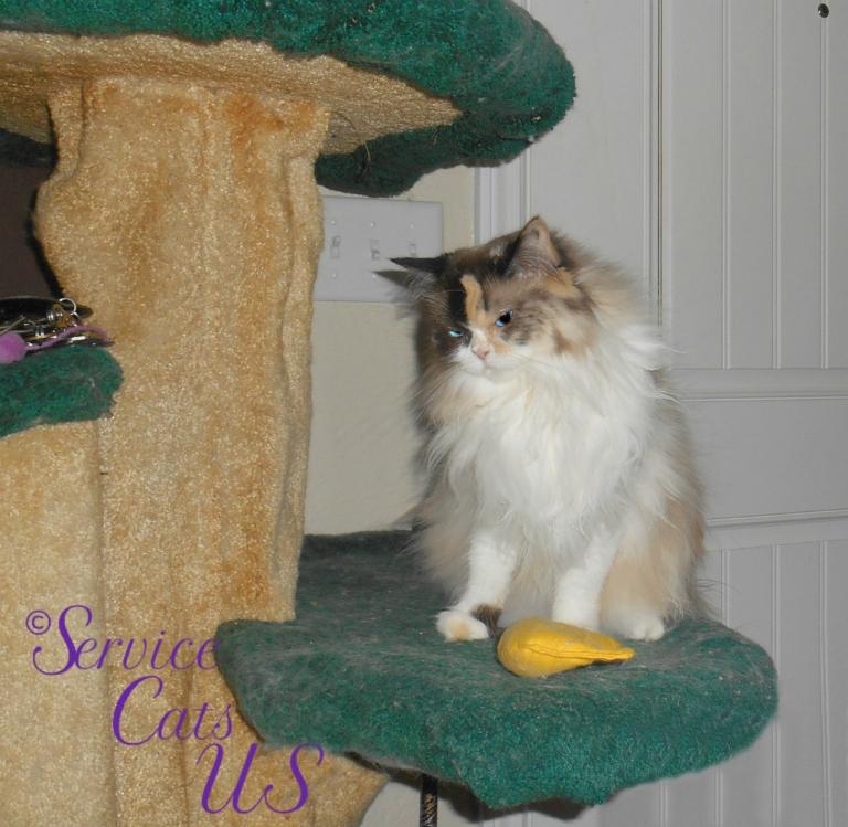 Raena sits pretty with nip nanner on cat tree
