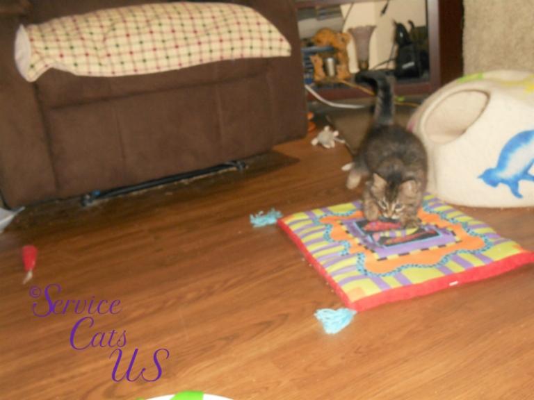 Zebby plays on cat mat