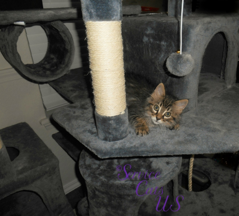Zebby finds the gray cat tree