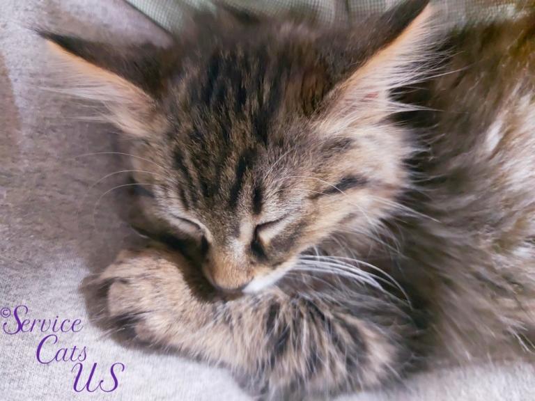 Zebby sleeps peacefully in mommy A's lap