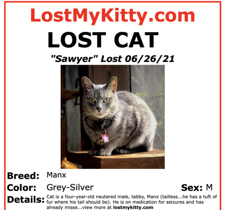 Lost cat poster for Sawyer of Kitties Blue