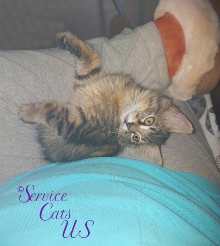 Zebby lays in lap