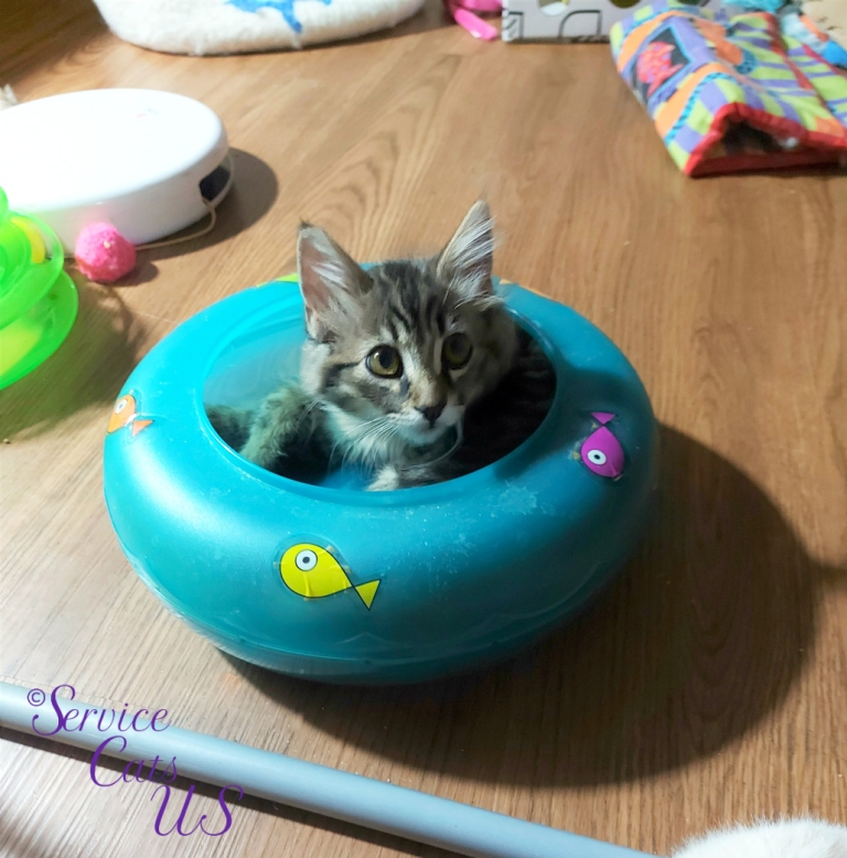 Zebby lays in fish bowl toy