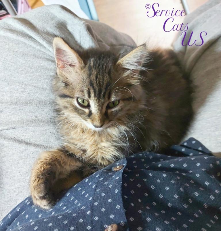Zebby lays in lap, selfie