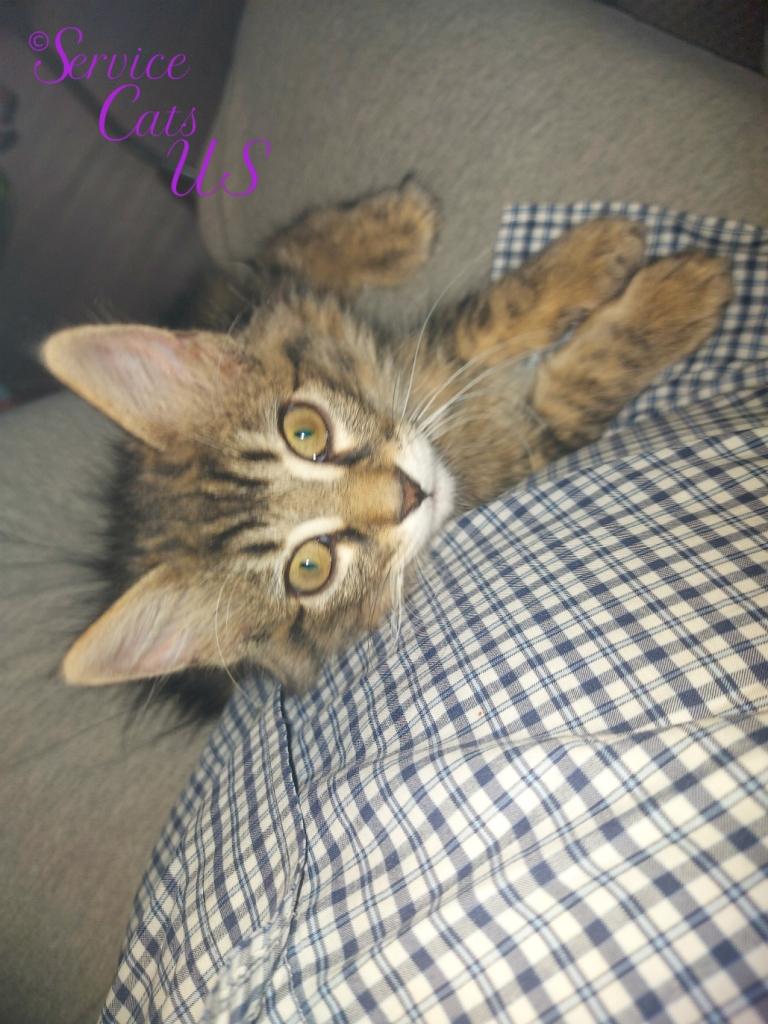 Zebby's curious lap selfie