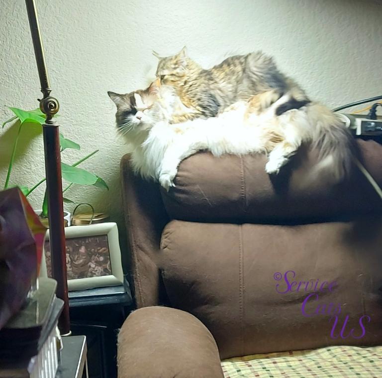 Zebby lays on Raena's back