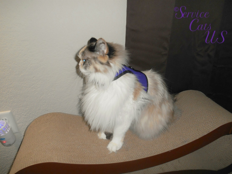 Raena sits in her catwalk harness