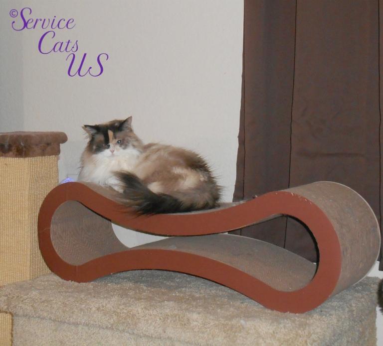 Raena lays on cat scratcher