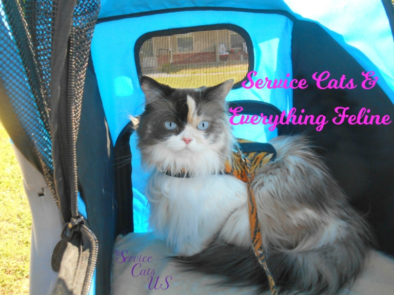 RaenaBelle in stroller with Service Cats and Everything Feline Logo