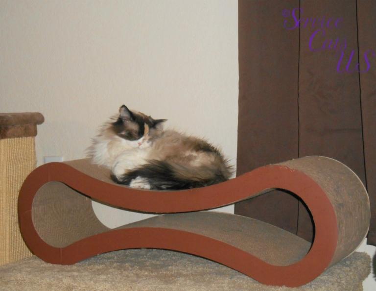 Raena sleeps on cat scratcher