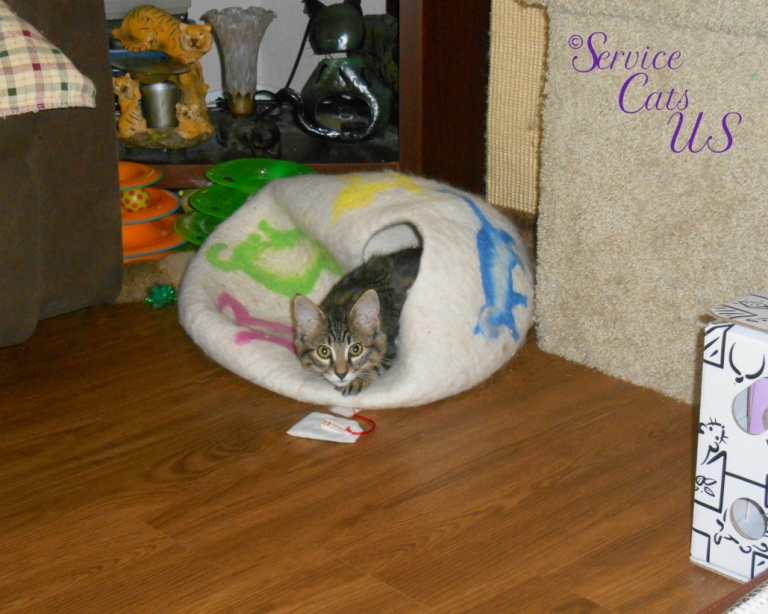 Zebby pokes his head out of the cat ball cave