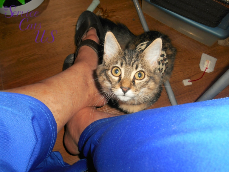 Zebby sits attentatively looking up between mommy A's legs on floor