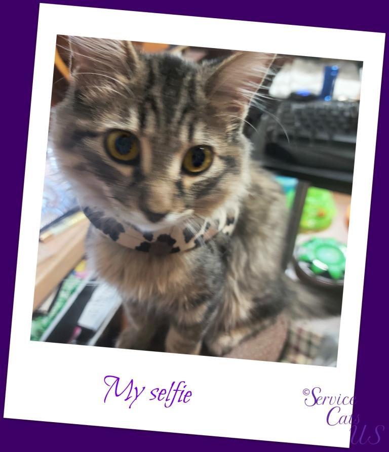 Zebby's polaroid selfie