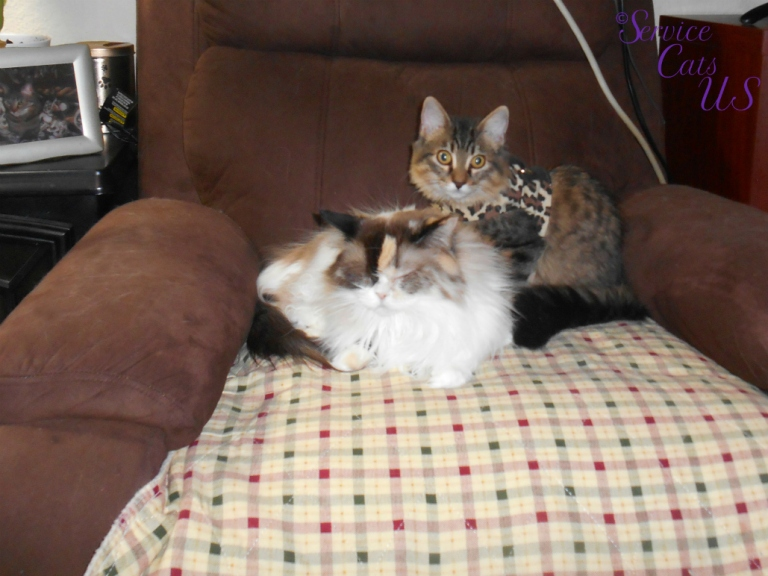 Raena and Zebby lay on chair together