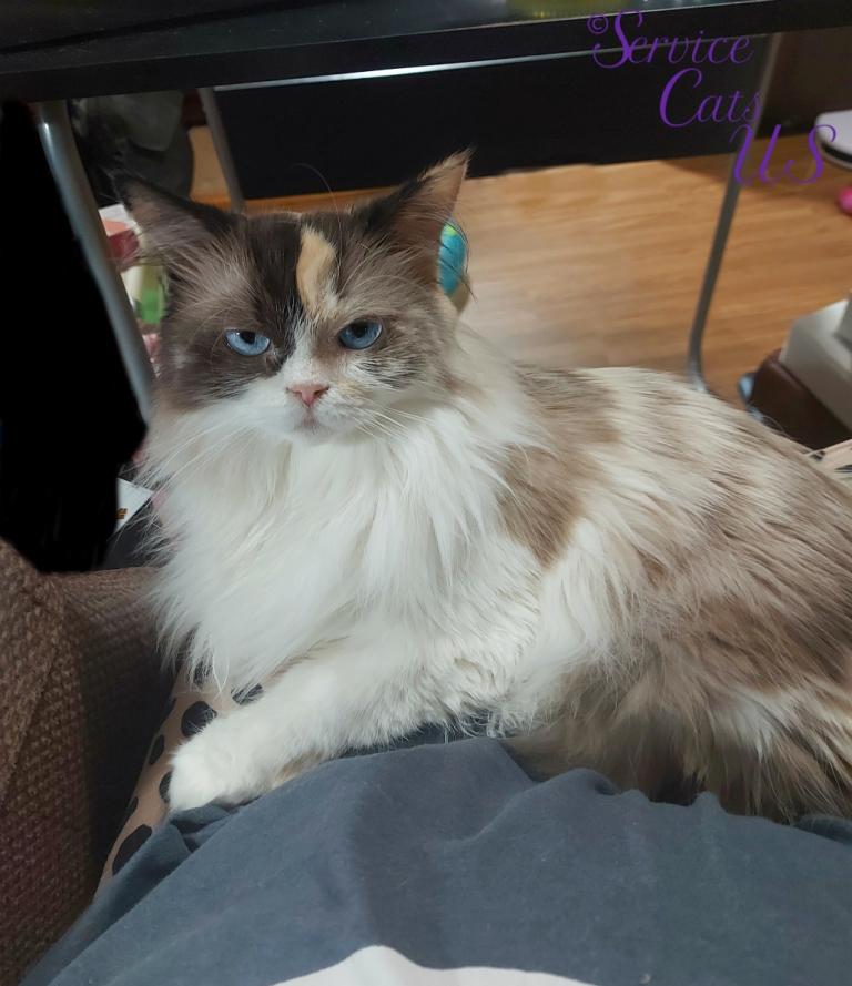 Raena lays in lap