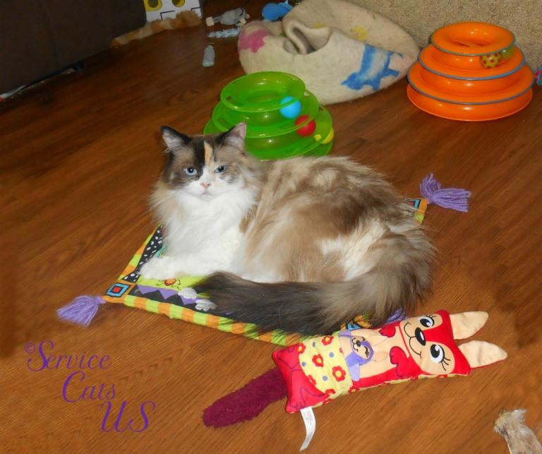 Raena lays on cat mat
