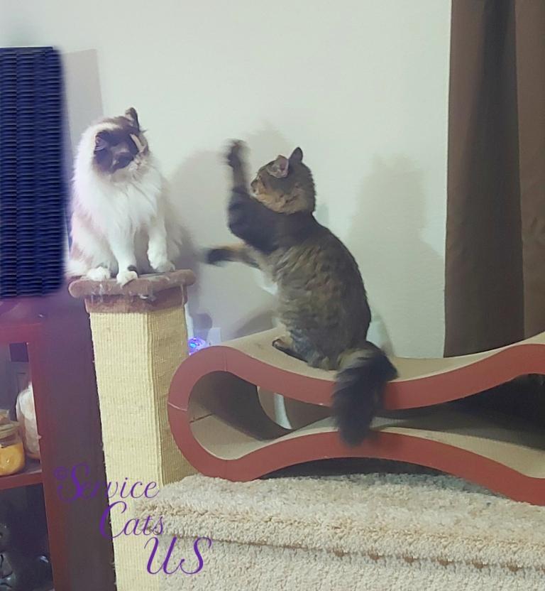 Raena and Zebby play patty cake/whacky paw