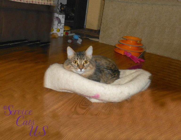 Zebby lays on cat ball