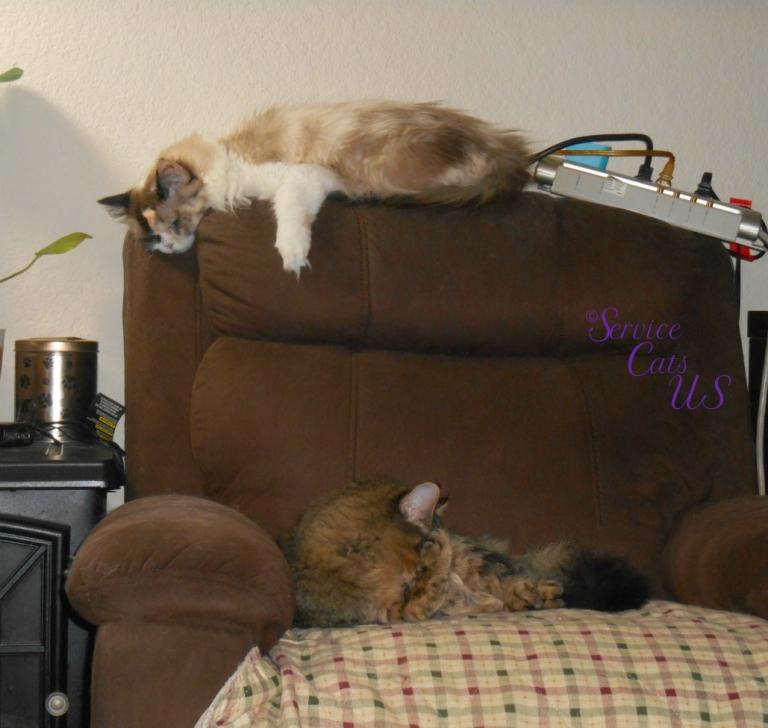 Raena and Zebby sleep on the chair