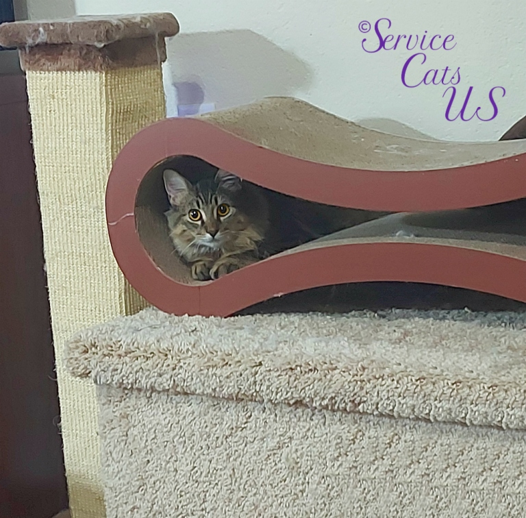 Zebby peeks out of scratcher