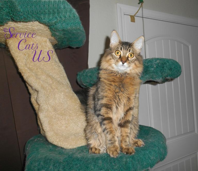 Zebby sits pretty atop cat tree