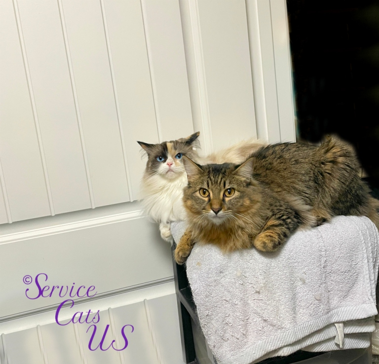 Raena and Zebby lay on the chest in the bathroom door