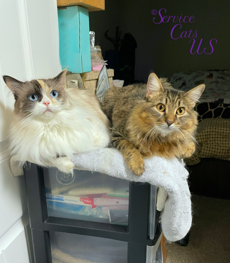 Raena and Zebby lay on chest in bathroom